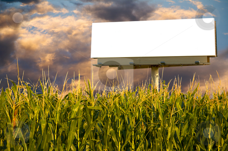 Clear Billboard sign stock photo, Field of Corn and a billboard in the early evening sun - the golden hour. by Mitch Aunger