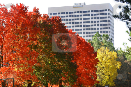 Autumn in Georgia stock photo, Autumn leaves in a business section of Atlanta Georgia by Jack Schiffer