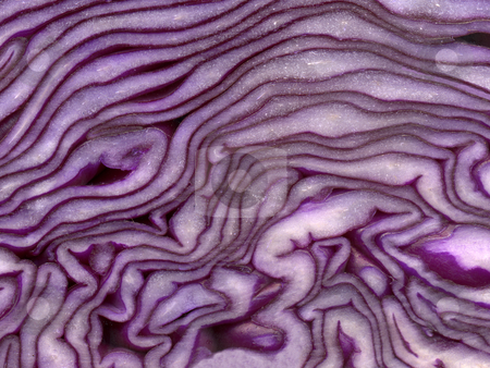 Close up of red cabbage. stock photo, Close up of red cabbage. by Stephen Rees