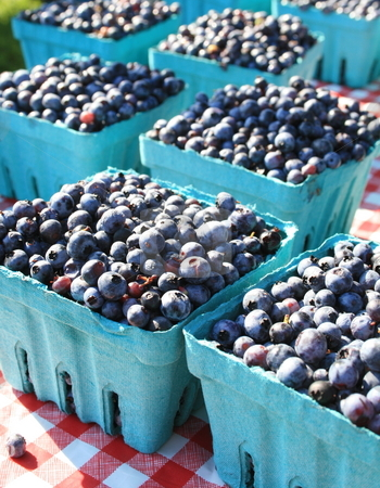 Fresh Blueberries at the Market stock photo, Boxes of fresh blueberries at the farmers market by Tom and Beth Pulsipher