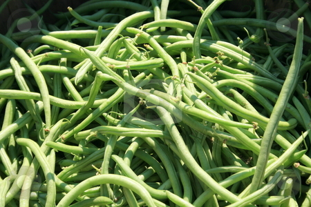 Freshly picked green beans stock photo,  by Tom and Beth Pulsipher