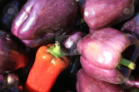 Fresh Purple and Red Peppers stock photo, At the farmers market, purple and red peppers by Tom and Beth Pulsipher