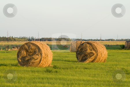 Hay Bale At Sunset stock photo, Two round hay bales shot during the sunset, creating a golden glow on the scenery by Richard Nelson