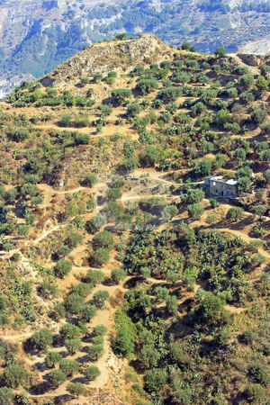 Aspromonte stock photo, Hills with olive-trees and abandoned buildings in Calabria (Southern Italy) by Natalia Macheda