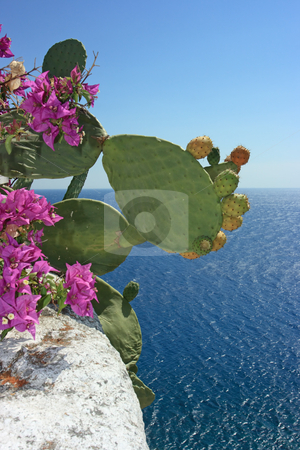 Opuntia ficus-indica stock photo, Ripe fruits of opuntia ficus-indica and beautiful flowers against the sea by Natalia Macheda