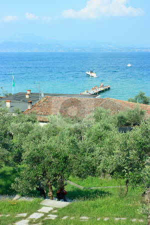 Olives in Sirmione stock photo, View on Garda lake in Sirmione from olive garden by Natalia Macheda