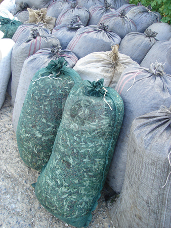 Sacks with olives stock photo, harvested olives in sacks agiculture production sacks by EVANGELOS THOMAIDIS