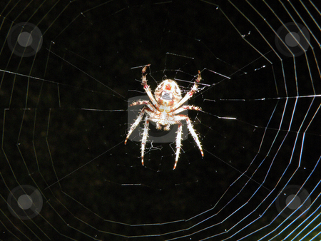 A large scary spider stock photo, A large scary spider sitting in it's web by Rob Wright