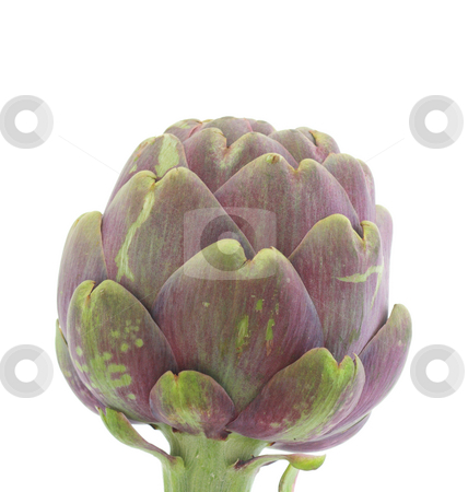 Artichoke stock photo, Artichoke close-up, isolated over white by Natalia Macheda
