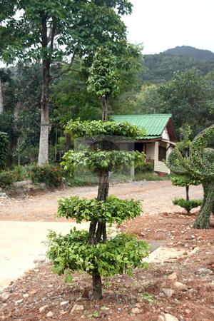 Garden art stock photo, Plant sculptures in thailand by EVANGELOS THOMAIDIS