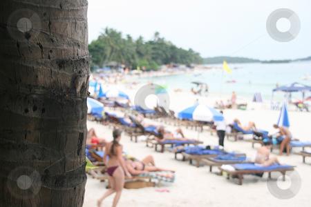 Palm tree and beach stock photo, Palm tree and beach Chaweng Beach Koh Samui Island thailand horizontal by EVANGELOS THOMAIDIS