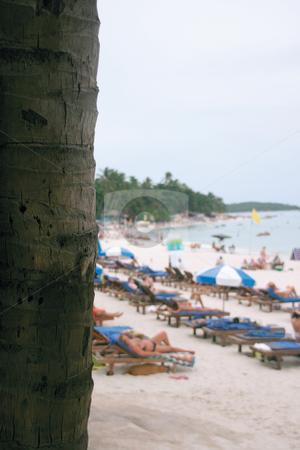 Palm tree and beach stock photo, Palm tree and beach Chaweng Beach Koh Samui Island thailand vertical by EVANGELOS THOMAIDIS