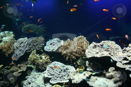 Exotic world stock photo, Fantastic underwater scene in aquarium with colorful tropical fishes and corals by Natalia Macheda