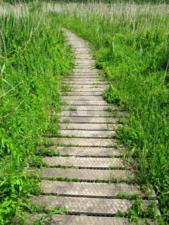 Vertical view of a wooden nature trail path. stock photo, Vertical view of a wooden nature trail path. by Stephen Rees