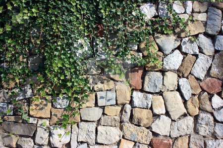 Ivy against stone wall stock photo, Ivy decorating a wall built of trimmed multicolored stones by Natalia Macheda