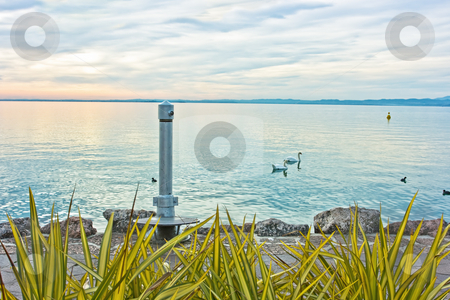 Garda sunset stock photo, Dramatic sunset over lake Garda (Northern Italy) with swans by Natalia Macheda