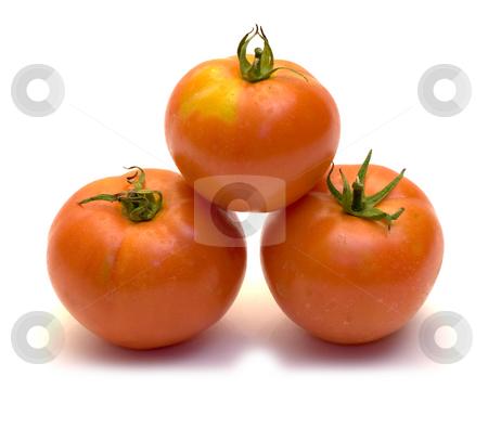 Three Tomatoes stock photo, Three fresh tomatoes, shot on a white background by Richard Nelson