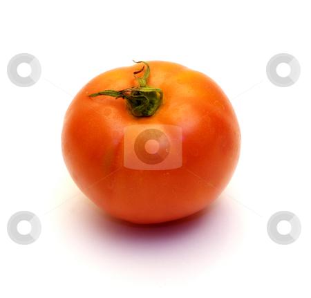Single Tomato stock photo, A single tomato shot on a white background by Richard Nelson