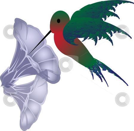 Little vector hummingbird stock vector clipart, Little vector hummingbird taking a sip of nectar from a morning glory flower by Michelle Bergkamp