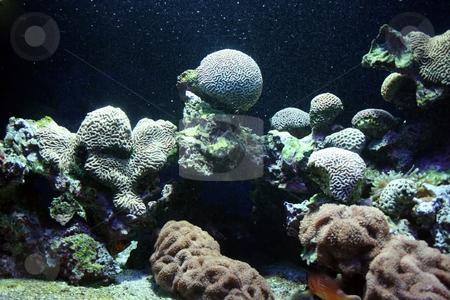 Ocean flora stock photo, Underwater corals seem extraterrestrial or future landscape by Natalia Macheda