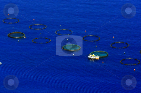 Fish growing stock photo, Fish farm in the sea near Calabria coast by Natalia Macheda