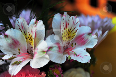 Beautiful Multi Colored Flowers stock photo, Closeup of flowers in many colorful shades of white, pink, and yellow in a shallow DOF. by Lynn Bendickson