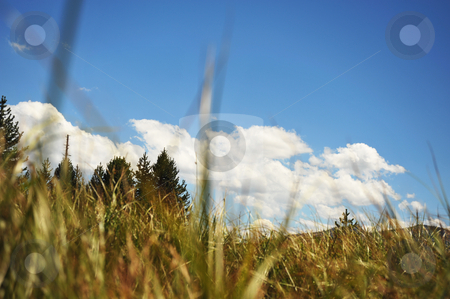 A Bugs Eye View stock photo, A Bugs eye view of the surrounding forest and sky. by Lynn Bendickson