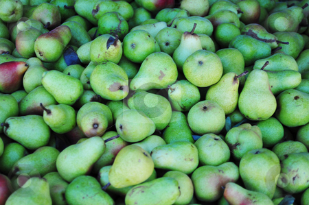 Pairs Of Pears stock photo, Many freshly harveted green Pears ready for market. by Lynn Bendickson
