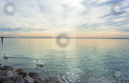 Swan lake stock photo, Dramatic sunset over lake Garda with floating swans by Natalia Macheda