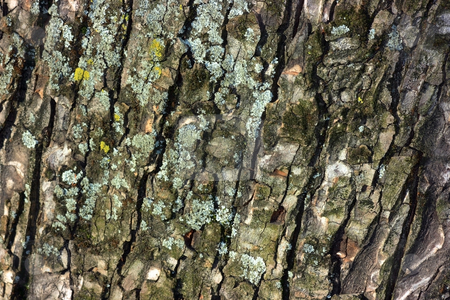 Tree bark close-up stock photo, Tree bark close-up by Natalia Macheda