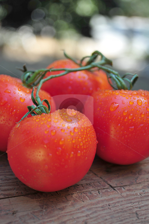 Ripe Red Tomatoes stock photo, Vine ripened tomatoes attached to the vine sitting on a piece of aged weathered wood. by Lynn Bendickson