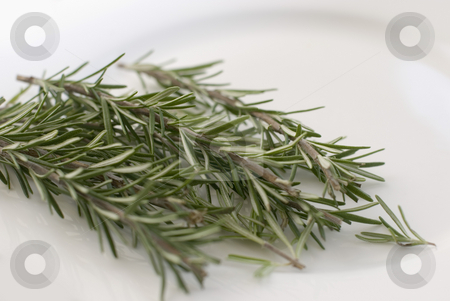 Rosemary stock photo, Rosemary (Rosmarinus officinalis), a perennial herb with fragrant evergreen leaves. It is native to the Mediterranean region. by Stephen Gibson