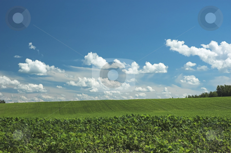 Green farm field stock photo, Farm field showing perfectly lined up crop under a summer sky by Pierre Landry