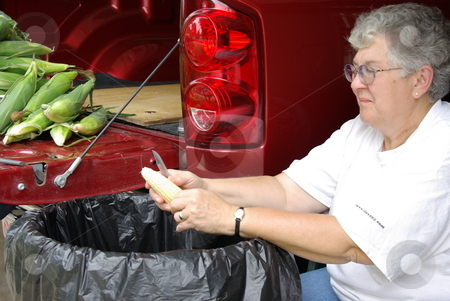Woman cleans sweet corn stock photo, An Iowa woman cleans (shucks) the leaves off an ear of fresh sweetcorn while sitting in her garage.  More ears of sweetcorn wait their turn on the tail end of her pickup. by Dennis Thomsen