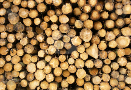 Close up of stacked cut forest tree logs. stock photo, Close up of stacked cut forest tree logs. by Stephen Rees