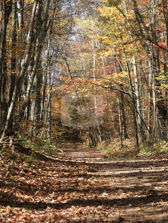 Deserted Autumn Road stock photo, This northern Minnesota lake trail sees little traffic after the summer season ends, but beckons to passerbys to be explored with its forest of birch trees and muted autumn colors. by Dennis Thomsen