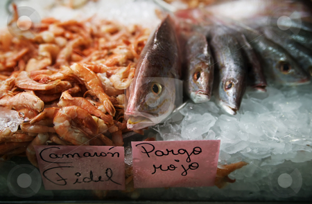 Fish in ice at a market stock photo, Fish and shrimp for sale in a Costa Rican market by Scott Griessel