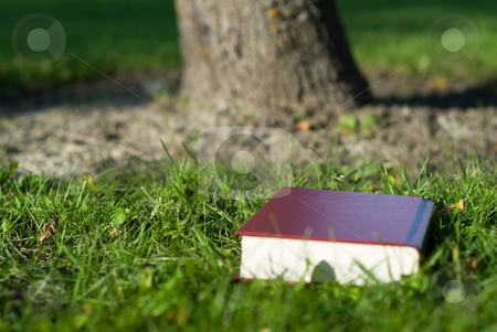 Holy Bible stock photo, A holy bible lying in the grass by a tree by Richard Nelson