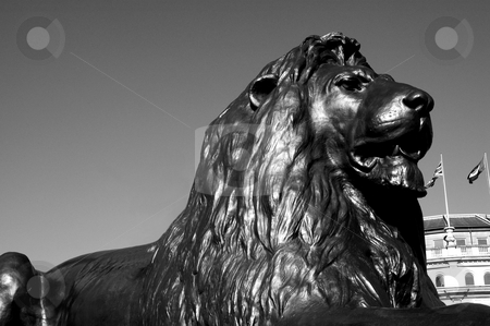 Guard Lion from National Gallery's Square stock photo, Lion from Nelson's Column in Trafalgar Square by Lee Torrens