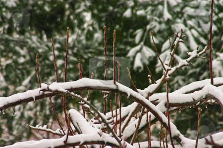 Winter Wonderland Scene