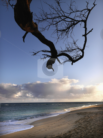 Maui Hawaii beach with branch stock photo, Tree branch in foreground of Maui, Hawaii beach scene. by Iofoto Images