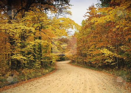 Fall colors_road through Minnesota autumn woods