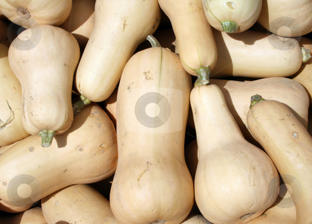 Butternut Squash stock photo, A pile of butternut squash for sale at the farmers market in the Fall by Tom and Beth Pulsipher