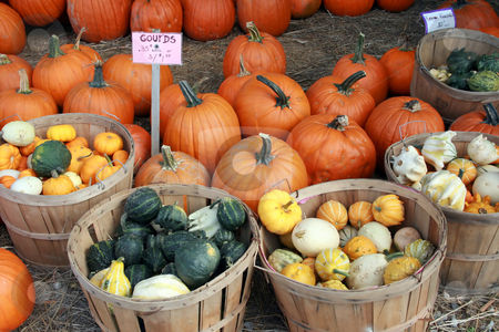 Colorful Gourds, Squash and Pumpkins stock photo, At the farmers market in Autumn, boldly colored squash, pumpkins and gourds available for sale by Tom and Beth Pulsipher