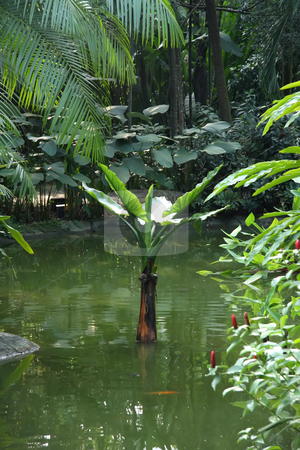 Tropical landscape stock photo, Tropical landscape scenery aquatic plants and pond by Kheng Guan Toh