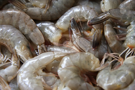 Whole raw prawns stock photo, Closeup of whole raw prawns in shells without head by Kheng Guan Toh