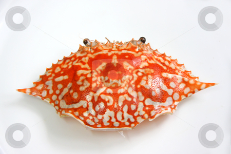 King crab shell stock photo, Whole shell of a cooked king crab removed on plate by Kheng Guan Toh