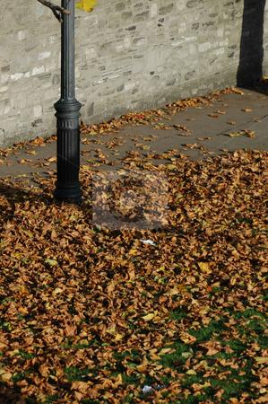 Autumn in Phoenix Park, Dublin stock photo, Autumn in Phoenix Park, Dublin by Simon Jeacle