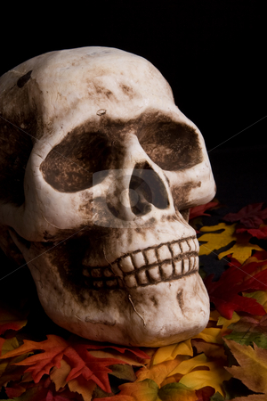 Halloween skull stock photo,  by Jose Wilson Araujo