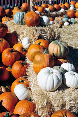 Colorful Pumpkins stock photo, Assorted colors of pumpkins on display on an autumn afternoon.. by Lynn Bendickson